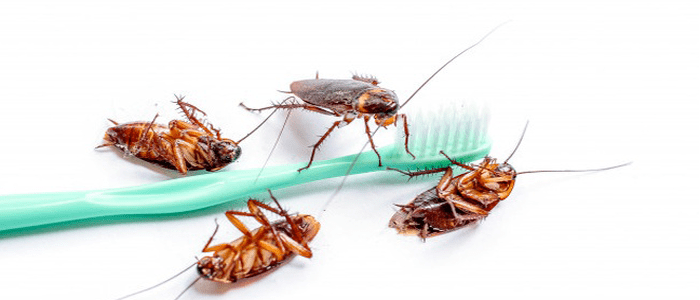 Affordable Cockroach Control Services