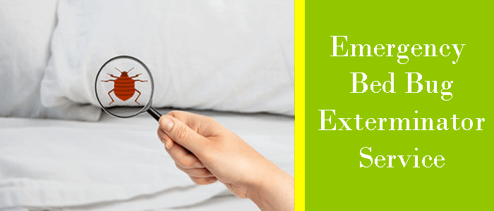 Emergency Bed Bug Exterminator Services
